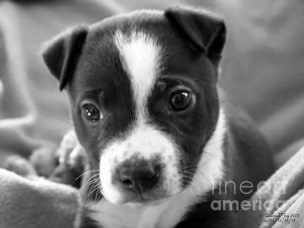 Abby The Rescued Dog Print by Deborah Fay