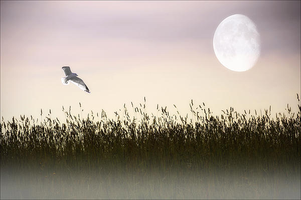 Above The Tall Grass Print by Tom York Images