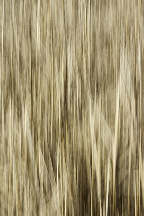 Abstract Cattails Print by Thomas Young