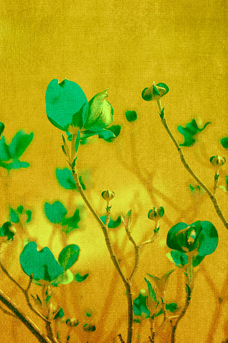 Abstract Dogwood Print by Bonnie Bruno