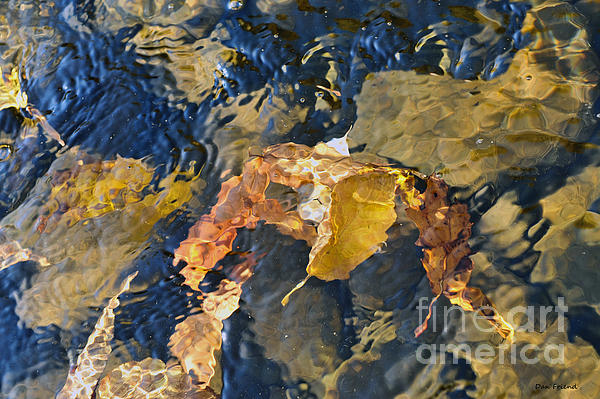 Abstract Leaves In Water Print by Dan Friend