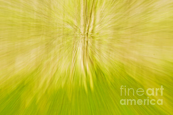 Abstract Nature Print by Gry Thunes