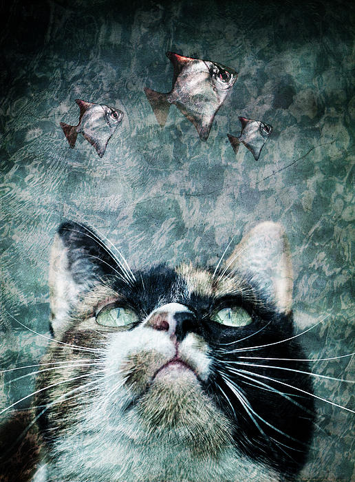 Abyss Cat Nr 2 Print by Laura Melis