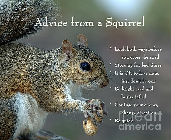 Nancy Greenland - Advice from a Squirrel