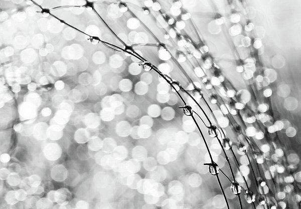 After The Rain Print by Theresa Tahara
