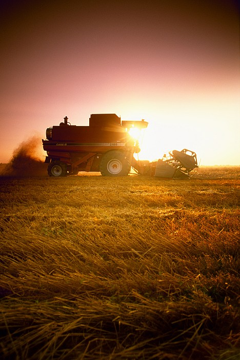 Agriculture - A Combine Harvests Wheat Print by Mirek Weichsel