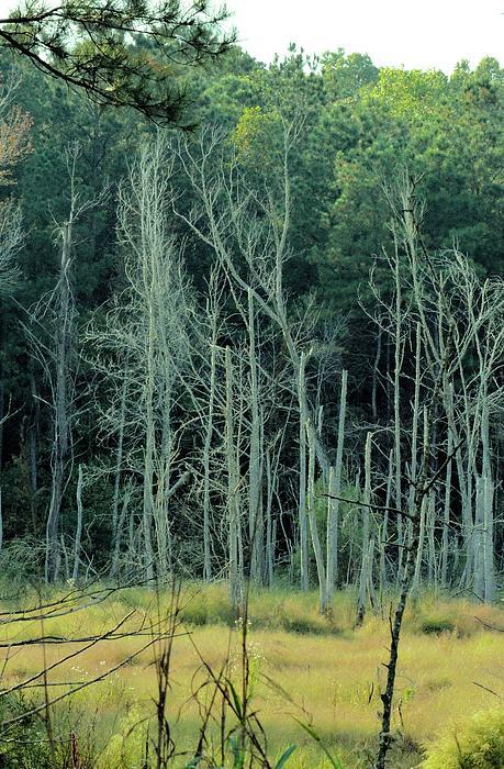 Alabama Autumn Marsh Print by Maria Urso