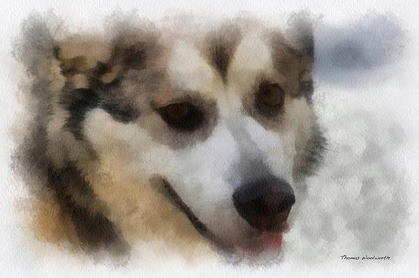 Alaskan Malamute Photo Art 08 Print by Thomas Woolworth