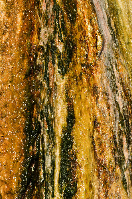 Algae On Travertine Print by Sue Smith