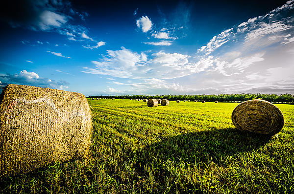 All American Hay Bales Print by David Morefield