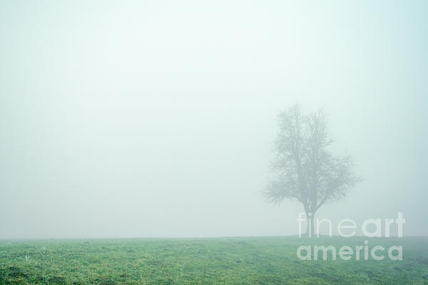 Alone In The Fog - Green Print by Hannes Cmarits