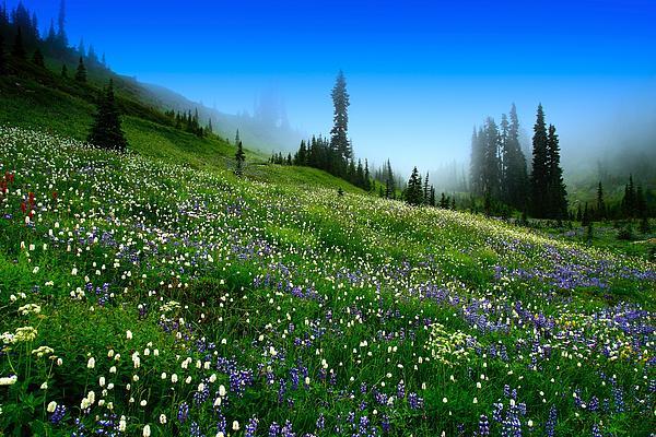 Lynn Hopwood - Alpine Meadow