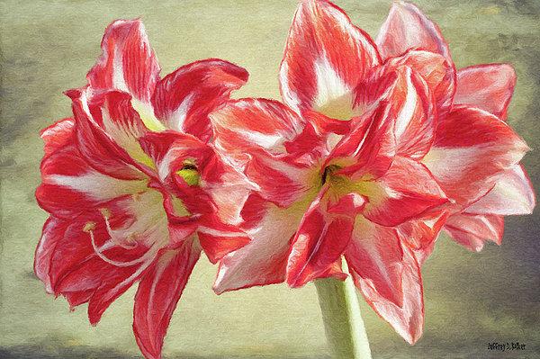 Amaryllis Red Print by Jeff Kolker