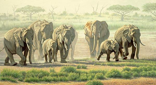 Amboseli Promenade Print by Paul Krapf