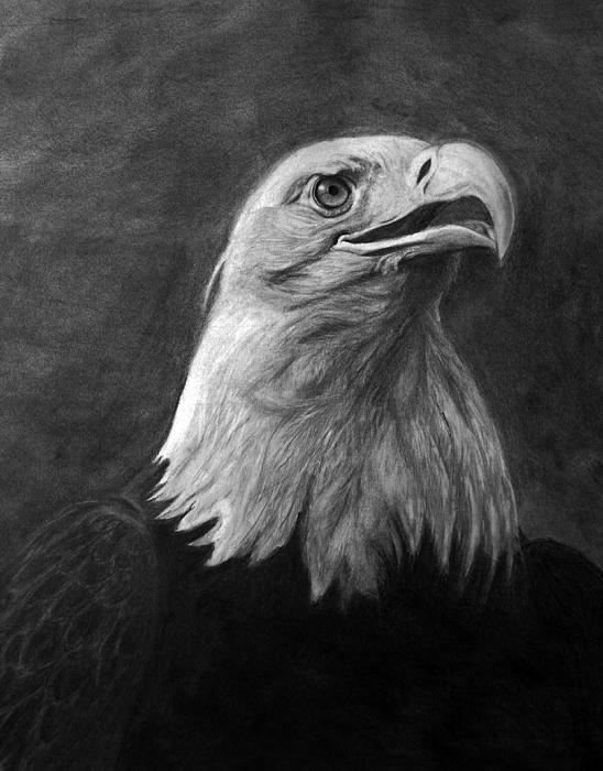 Bev Newcomer - American Bald Eagle
