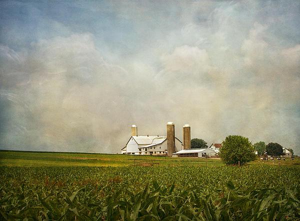 Kim Hojnacki - Amish Farmland
