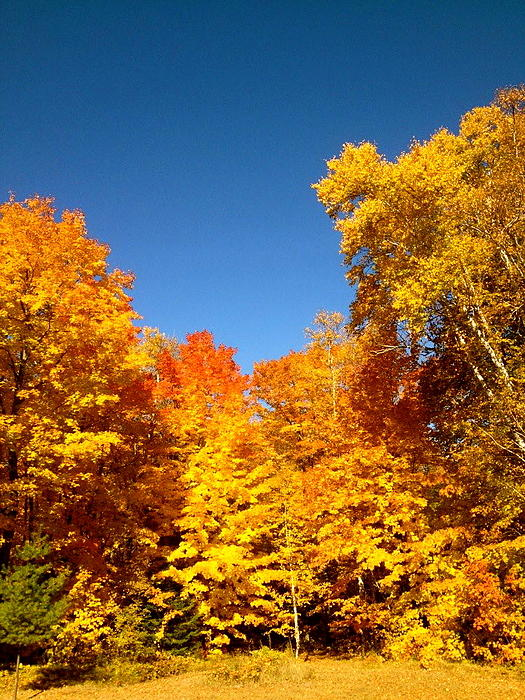 An Autumn Of Gold Print by Danielle  Broussard