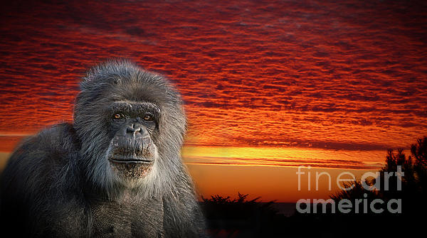 Jim Fitzpatrick - An Elderly Chimp at the End of a Day
