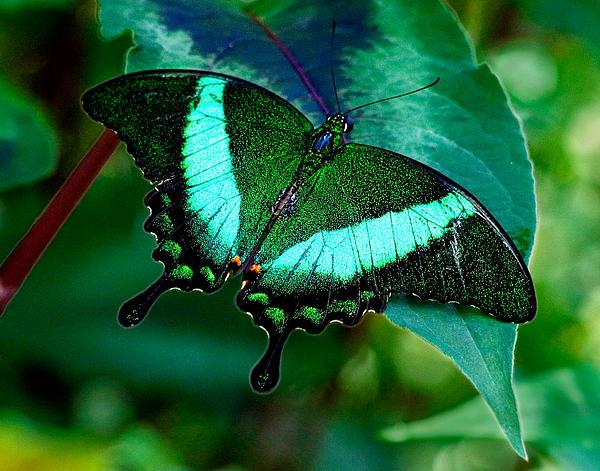 An Emerald Beauty Print by Karen Stephenson