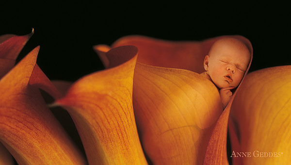Ana In Calla Lily Print by Anne Geddes
