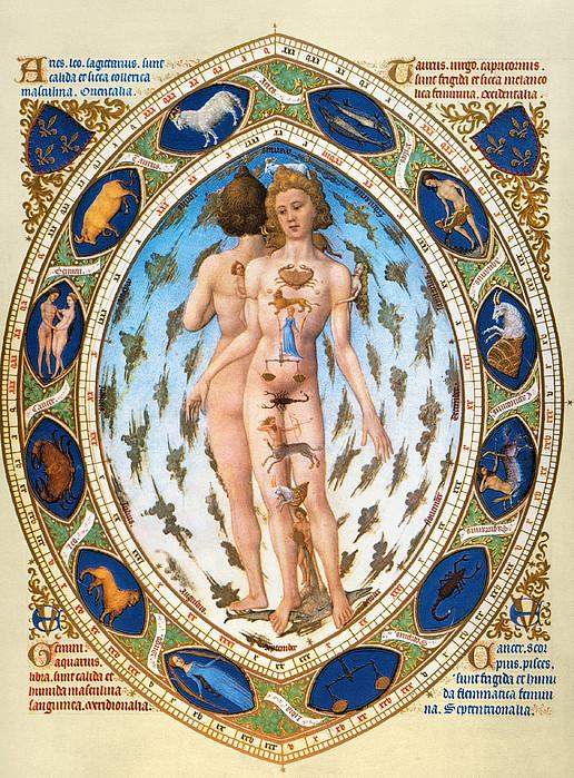 Anatomical Man Print by Granger
