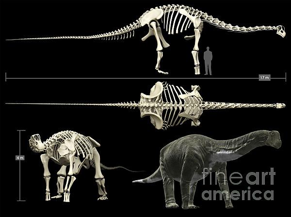 Anatomy Of A Titanosaur Print by Rodolfo Nogueira
