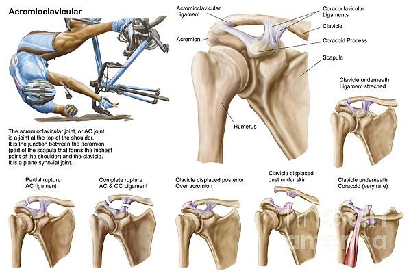 Ac joint anatomy