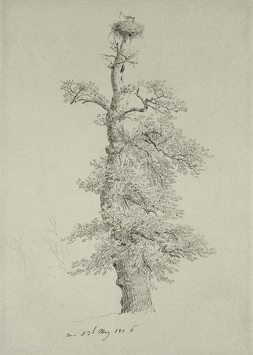 Ancient Oak Tree With A Storks Nest Print by Caspar David Friedrich