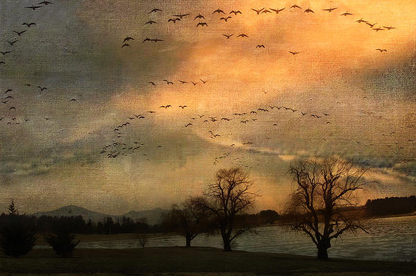 And They Flew Away Print by Kathy Jennings