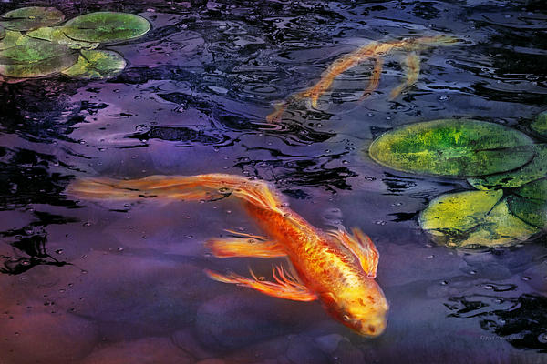 Animal - Fish - There's Something About Koi  Print by Mike Savad
