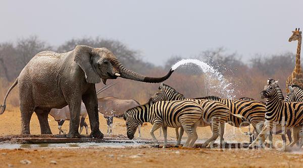 Johan Swanepoel - Animal humour