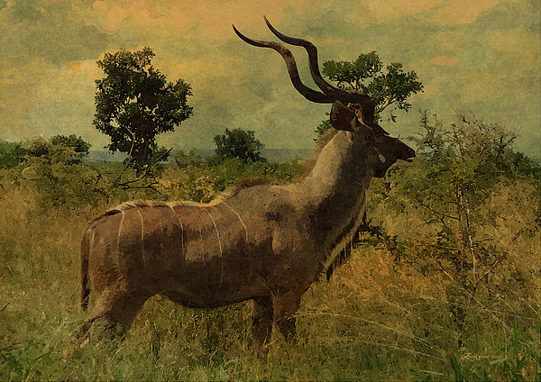 Antelope Print by EricaMaxine  Price