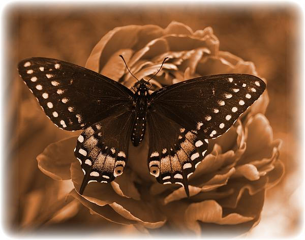 Antique Butterfly Print by Diane Reed