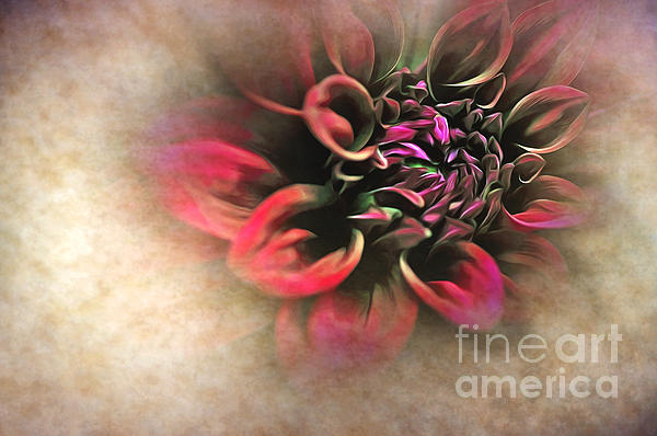 Antique Dahlia Print by Kaye Menner