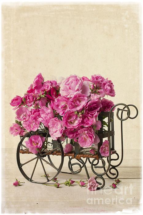 Antique Rose Cart Print by Edward Fielding