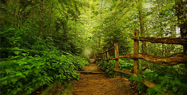 Appalachian Trail At Newfound Gap Print by Stephen Stookey