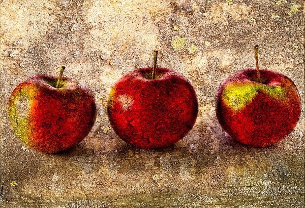 Apple Print by Bob Orsillo