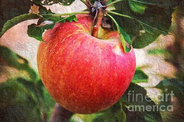 Apple On The Tree Print by Andee Design