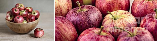 Apples 02 Print by Nailia Schwarz