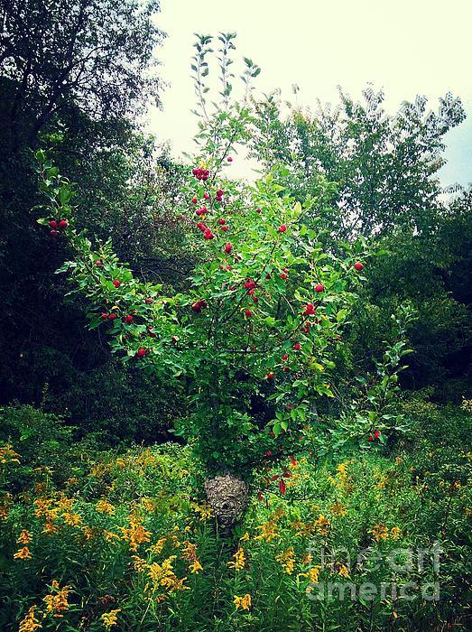 Apples And Hornets Print by Garren Zanker