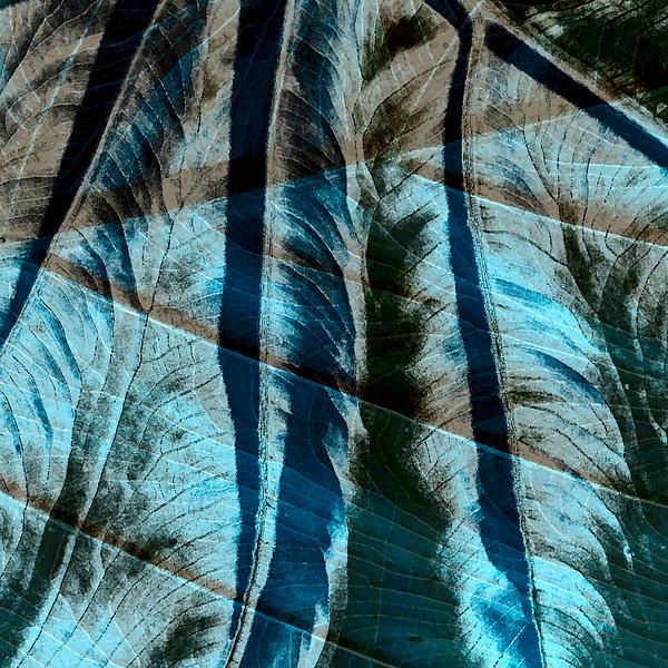 Aqua And Brown Leaf Montage Print by Bonnie Bruno