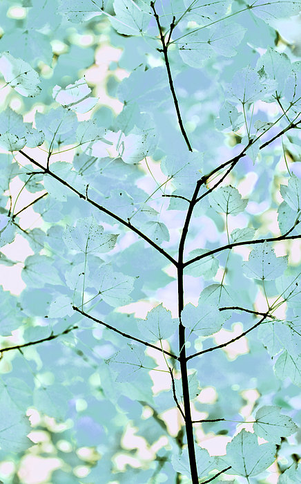 Aqua Blues Greens Leaves Melody Print by Jennie Marie Schell