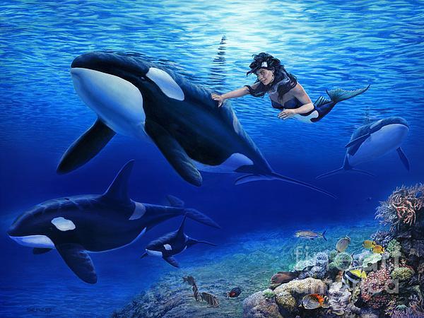 Aquaria's Orcas Print by Stu Shepherd