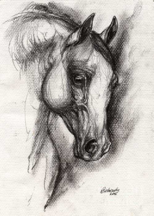 Arabian Horse Drawing 12 Print by Angel  Tarantella
