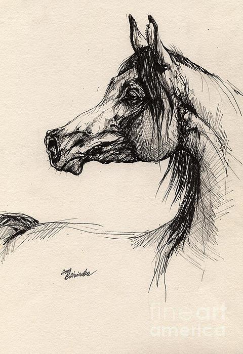 Arabian Horse Drawing 26 Print by Angel  Tarantella