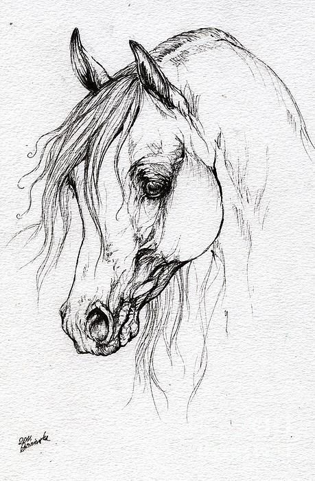 Arabian Horse Drawing By Angel Tarantella