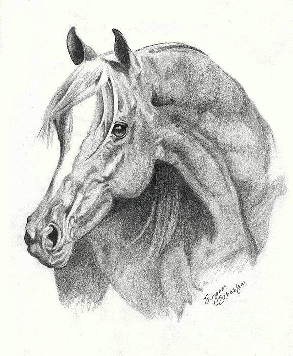 Arabian Stallion Print by Suzanne Schaefer