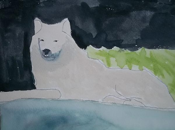 Arctic Wolf Watercolor On Paper Print by William Sahir House