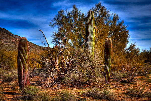 Arizona Landscape II Print by David Patterson