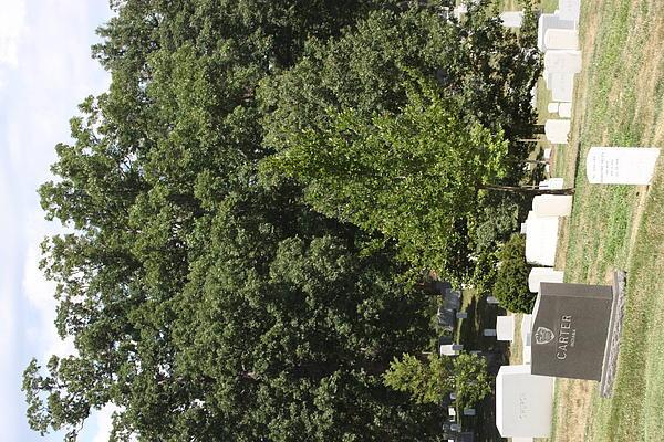Arlington National Cemetery - 121238 Print by DC Photographer